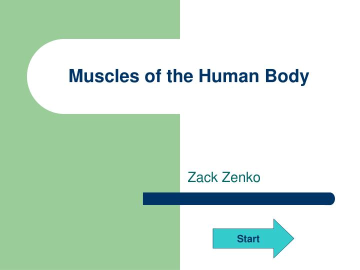 muscles of the human body n.