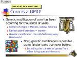 corn is a gmo