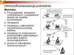 immunofluorescencja po rednia1