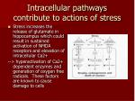 intracellular pathways contribute to actions of stress1