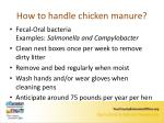 how to handle chicken manure