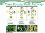 all three photosynthetic pathways