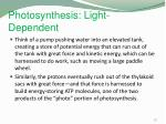 photosynthesis light dependent5
