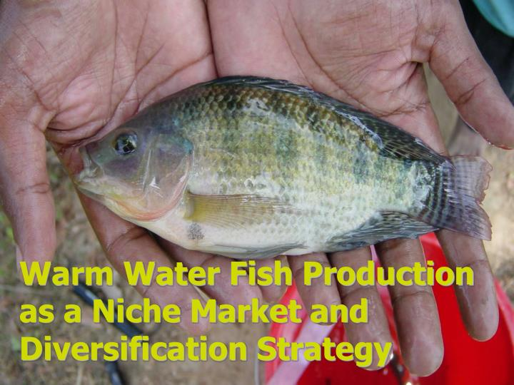 warm water fish production as a niche market and diversification strategy n.