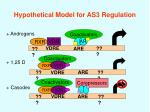 hypothetical model for as3 regulation