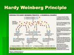 hardy weinberg principle1