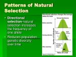 patterns of natural selection1