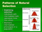 patterns of natural selection2