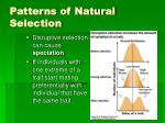 patterns of natural selection4