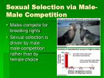 sexual selection via male male competition