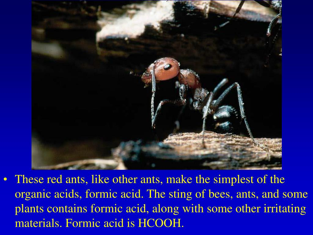 These red ants, like other ants, make the simplest of the organic acids, formic acid. The sting of bees, ants, and some plants contains formic acid, along with some other irritating materials. Formic acid is HCOOH.