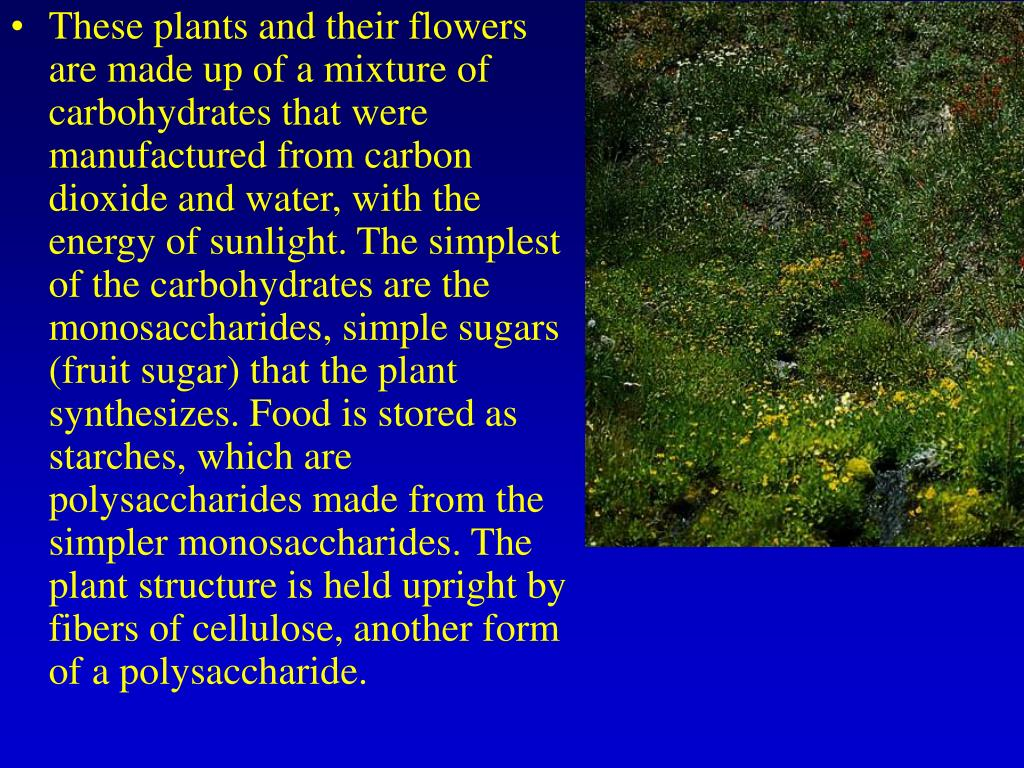 These plants and their flowers are made up of a mixture of carbohydrates that were manufactured from carbon dioxide and water, with the energy of sunlight. The simplest of the carbohydrates are the monosaccharides, simple sugars (fruit sugar) that the plant synthesizes. Food is stored as starches, which are polysaccharides made from the simpler monosaccharides. The plant structure is held upright by fibers of cellulose, another form of a polysaccharide.