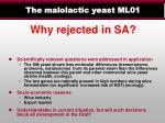the malolactic yeast ml011