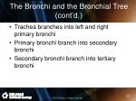the bronchi and the bronchial tree cont d1