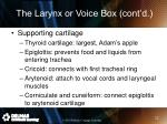 the larynx or voice box cont d