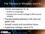 the trachea or windpipe cont d