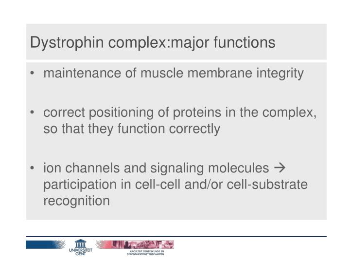 Dystrophin complex:major functions