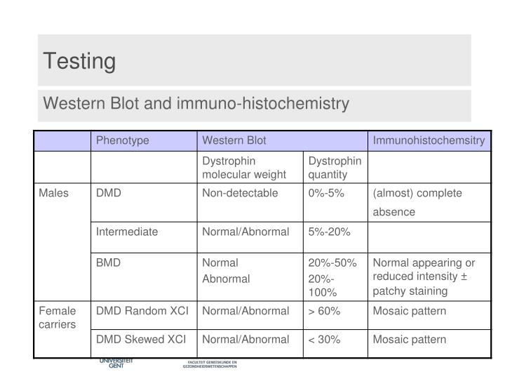 Western Blot and immuno-histochemistry