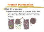 protein purification5