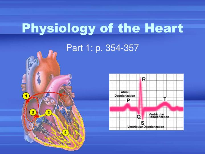 physiology of the heart n.
