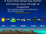 a food chain shows how matter and energy move through an ecosystem