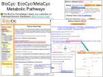 biocyc ecocyc metacyc metabolic pathways