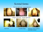 scrotal forms