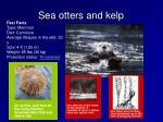 sea otters and kelp