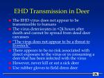ehd transmission in deer