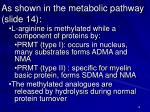 as shown in the metabolic pathway slide 14