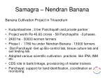 samagra nendran banana