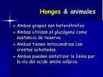 hongos animales