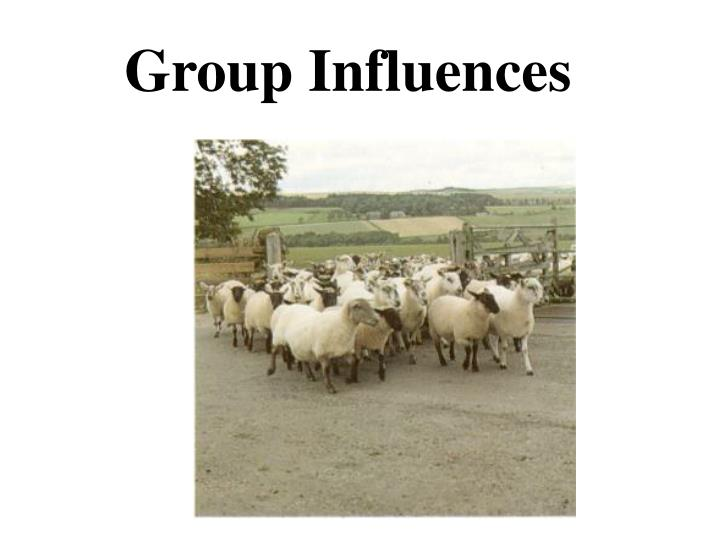 group influences n.