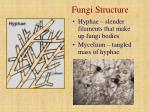 fungi structure