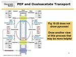 pep and oxaloacetate transport
