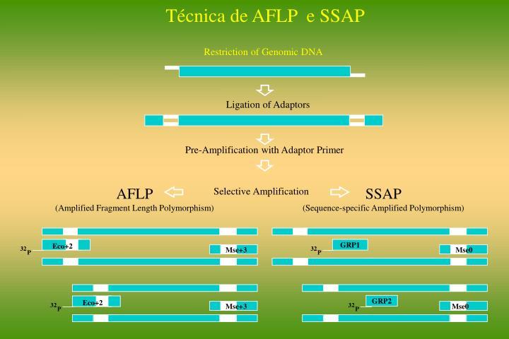 Técnica de AFLP  e SSAP