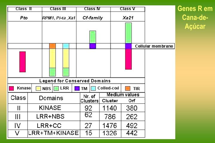 Genes R em Cana-de-Açúcar