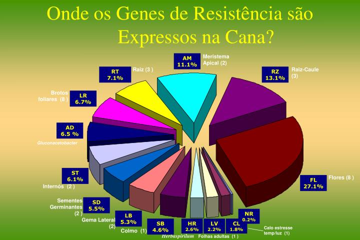 Onde os Genes de Resistência são Expressos na Cana?