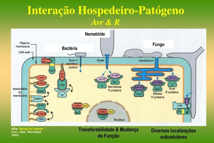 Interação Hospedeiro-Patógeno
