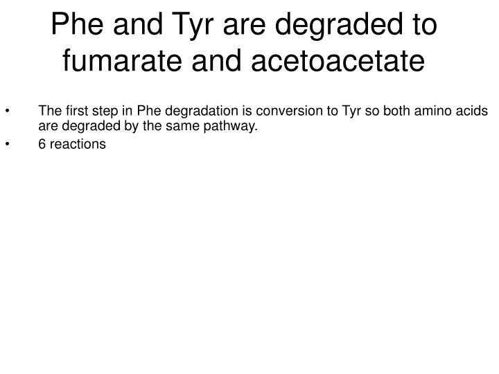 Phe and Tyr are degraded to fumarate and acetoacetate