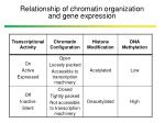relationship of chromatin organization and gene expression