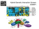 hybrid genetic interaction screen emap