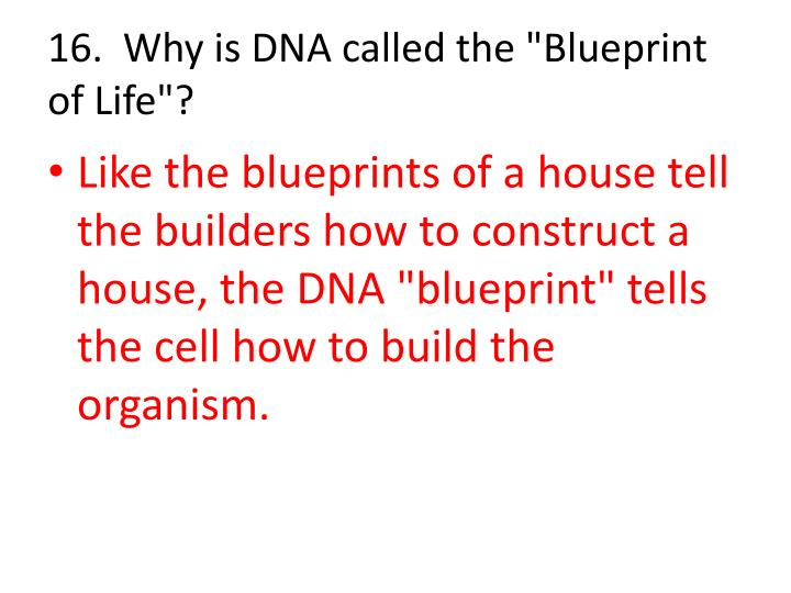Ppt dna the double helix powerpoint presentation id791473 why is dna called the blueprint of life malvernweather Images