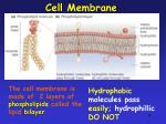 cell membrane2