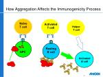 how aggregation affects the immunogenicity process