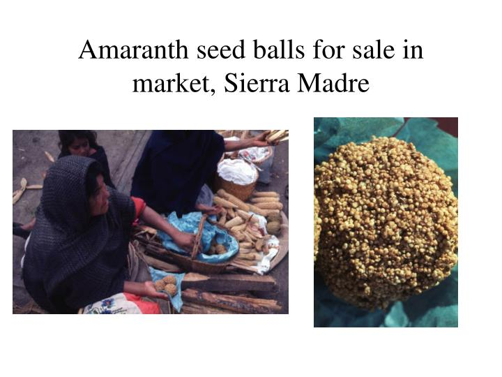 Amaranth seed balls for sale in market, Sierra Madre