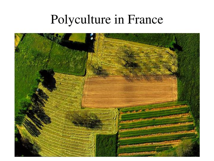 Polyculture in France