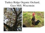 turkey ridge organic orchard gays mill wisconsin