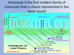 arecaceae is the first modern family of monocots that is clearly represented in the fossil record