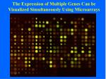 the expression of multiple genes can be visualized simultaneously using microarrays1